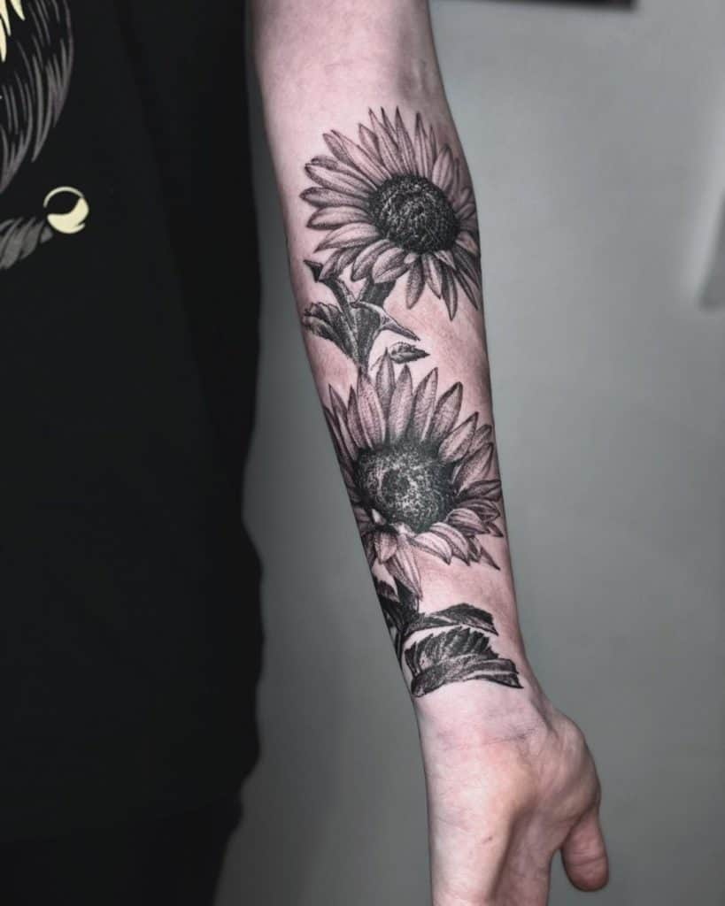 non color sunflower